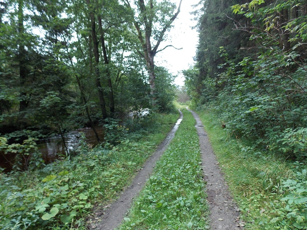 Waldweg an Bode