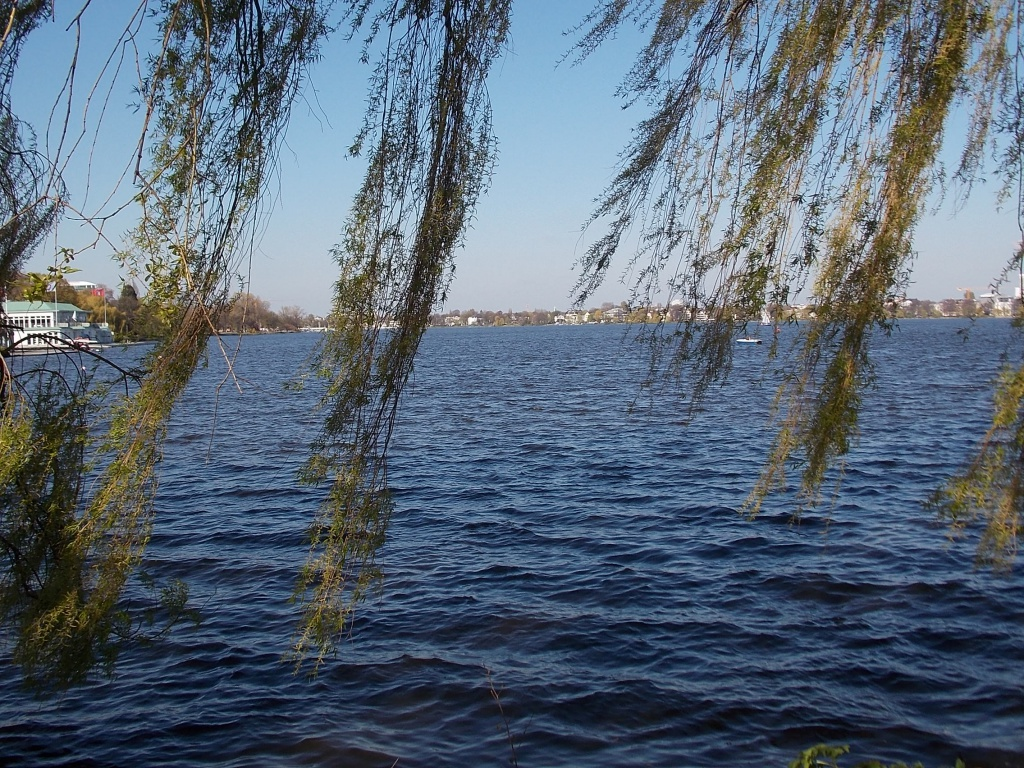 Die Alster von der Kennedybrücke aus gesehen. Es ist ein See mit einer Trauerweide davor zu erkennen.