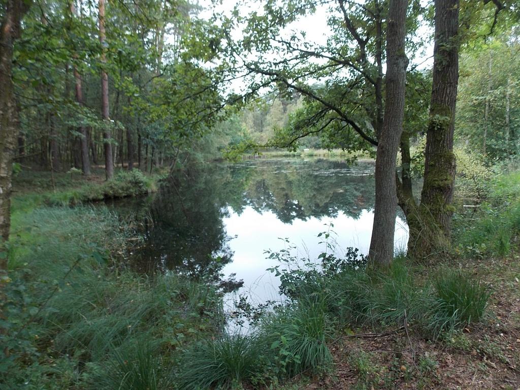 Wesel Teich