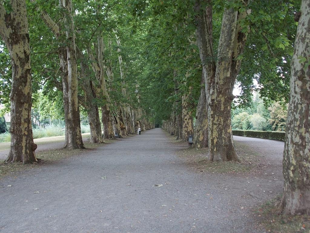 Tübingen Platanenallee