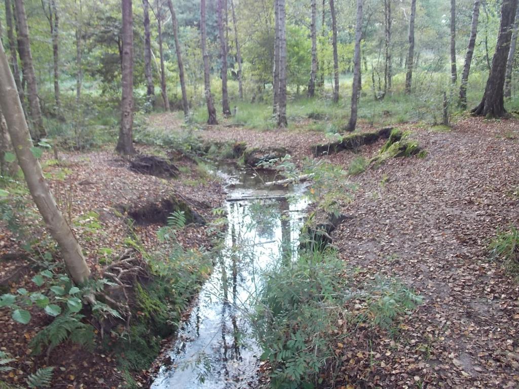 Aue in Meinholz