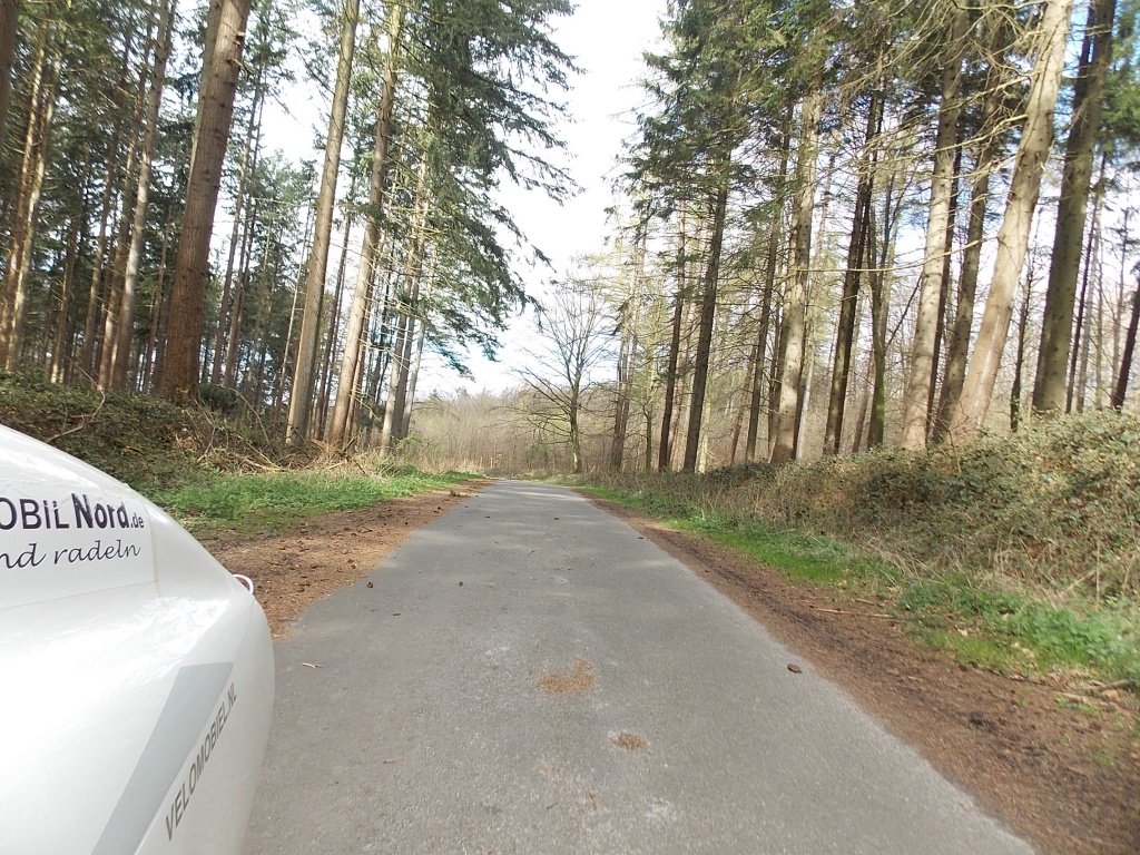 Altenhof Wald