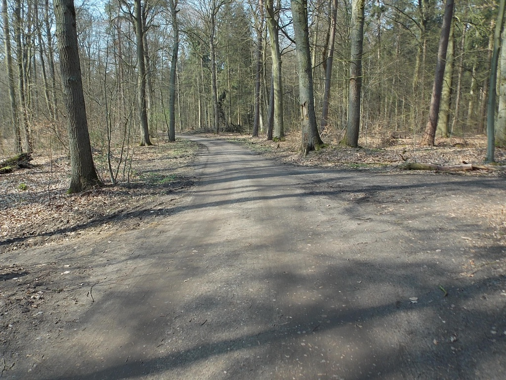 Waldwegkreuzung