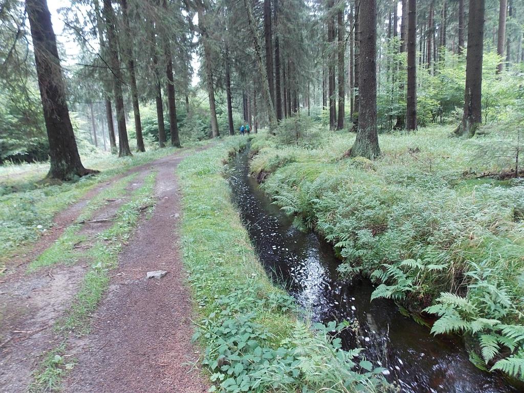 Dammgraben Harz