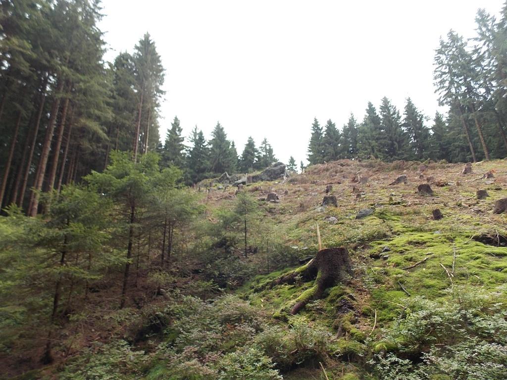 Altenau Harz