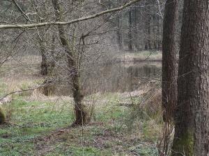 W4 Brekendorfer Forst