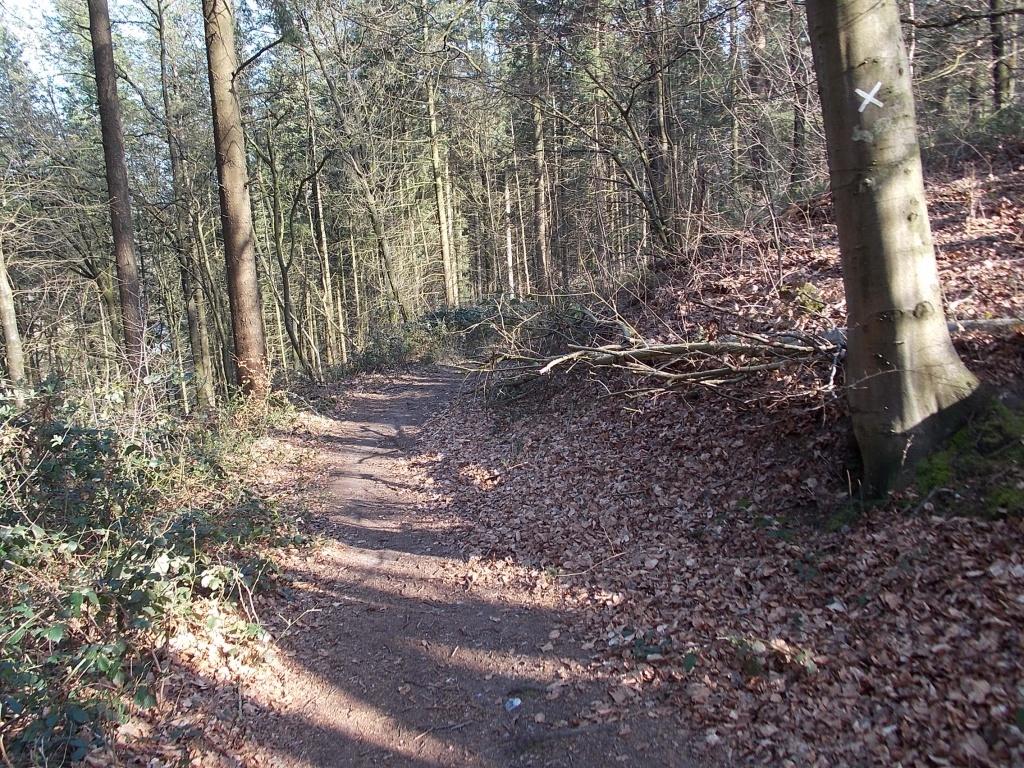 W4 Brekendorfer Forst und E1