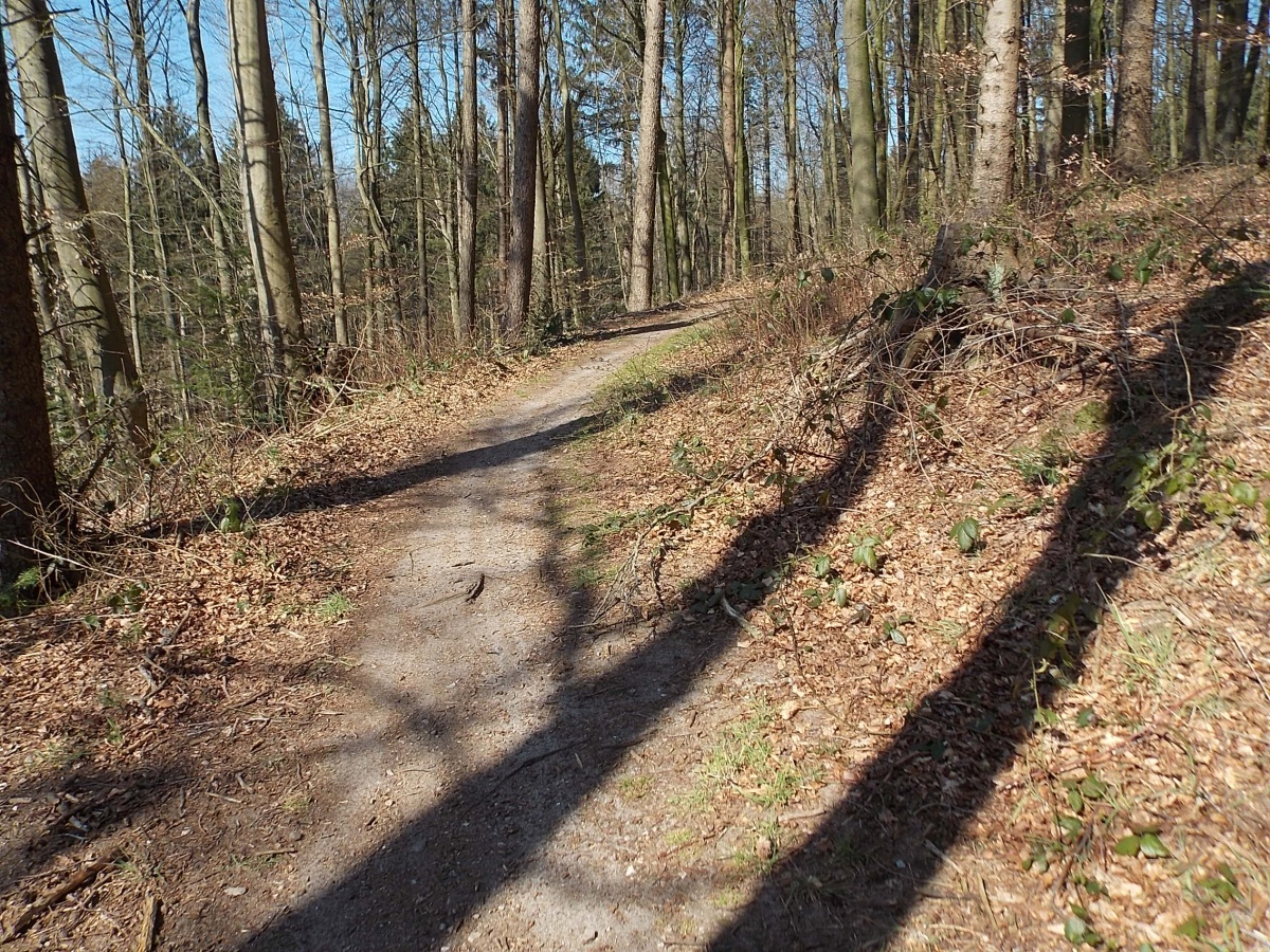 W3 Brekendorfer Forst