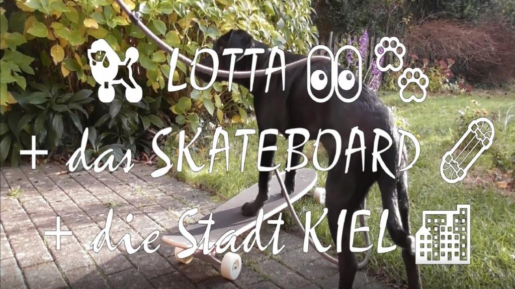 Lotta Labrador Skateboard Kiel