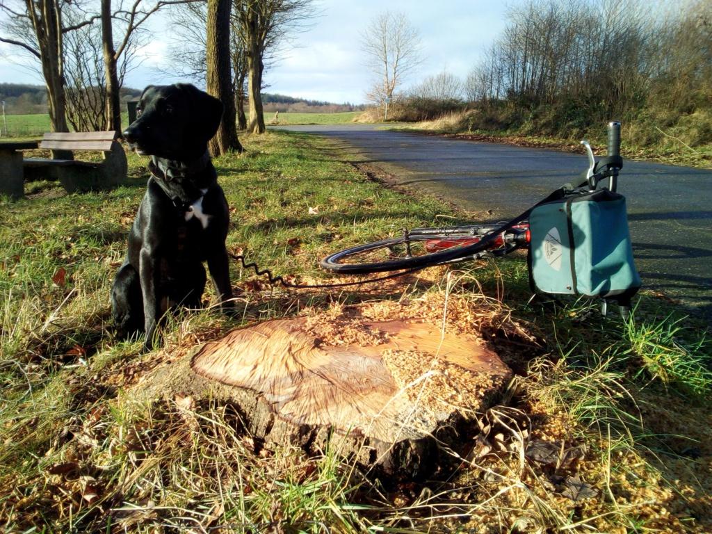 Tretroller und Labrador Lotta