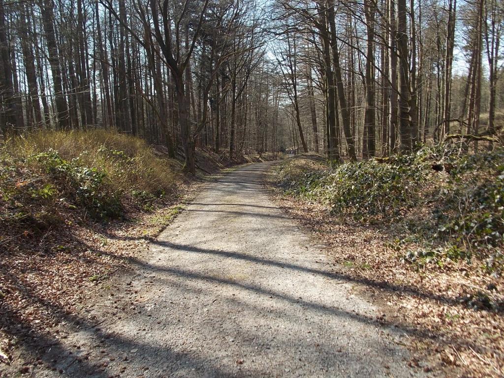 Brekendorfer Forst Scheelsberg