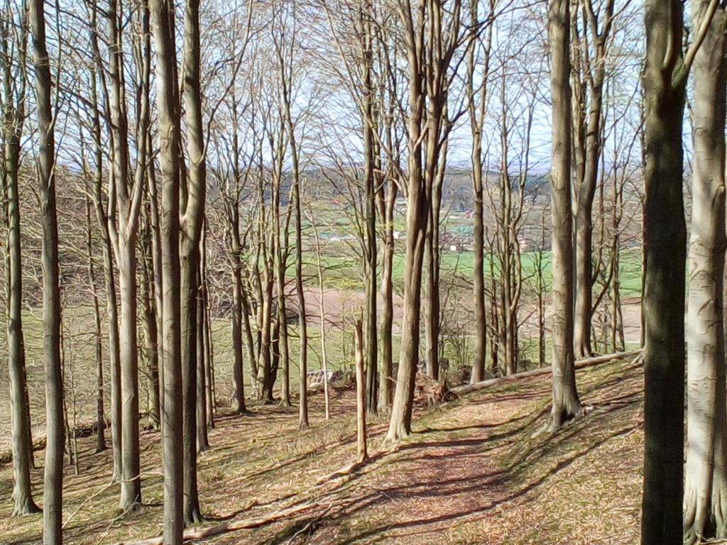 Brekendorfer Forst