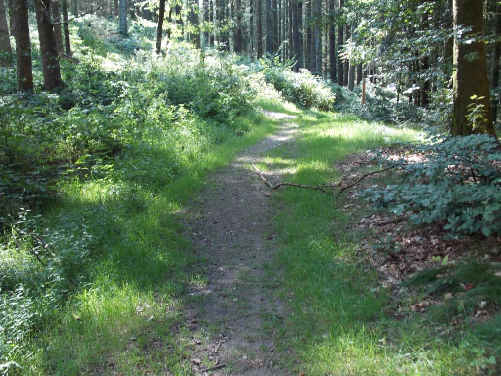 Wanderroute 7 Brekendorfer Forst