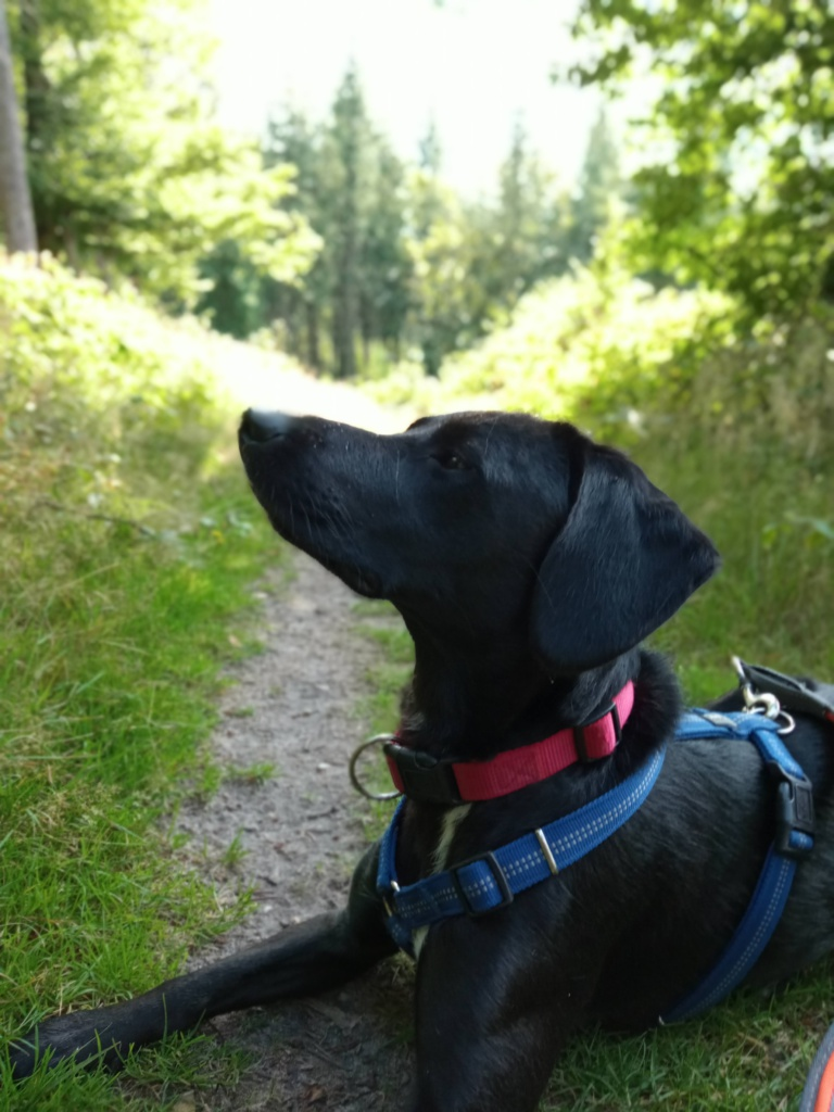Wanderroute 7 Brekendorfer Forst Labrador Lotta