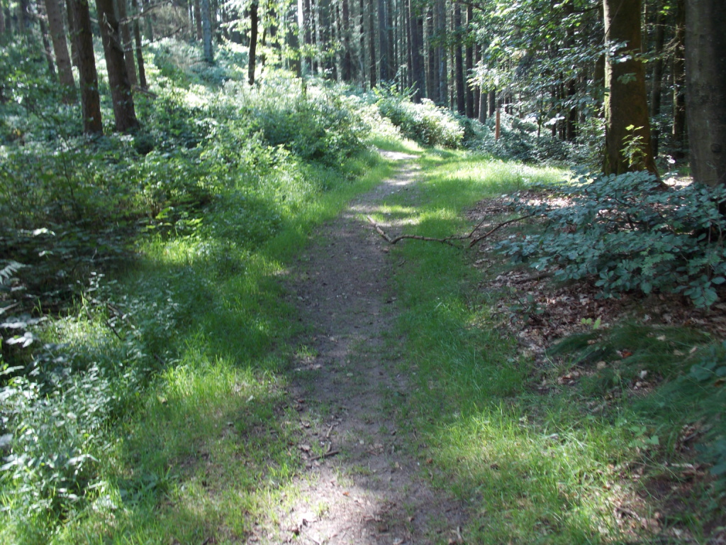 Wanderweg 7 Brekendorfer Forst