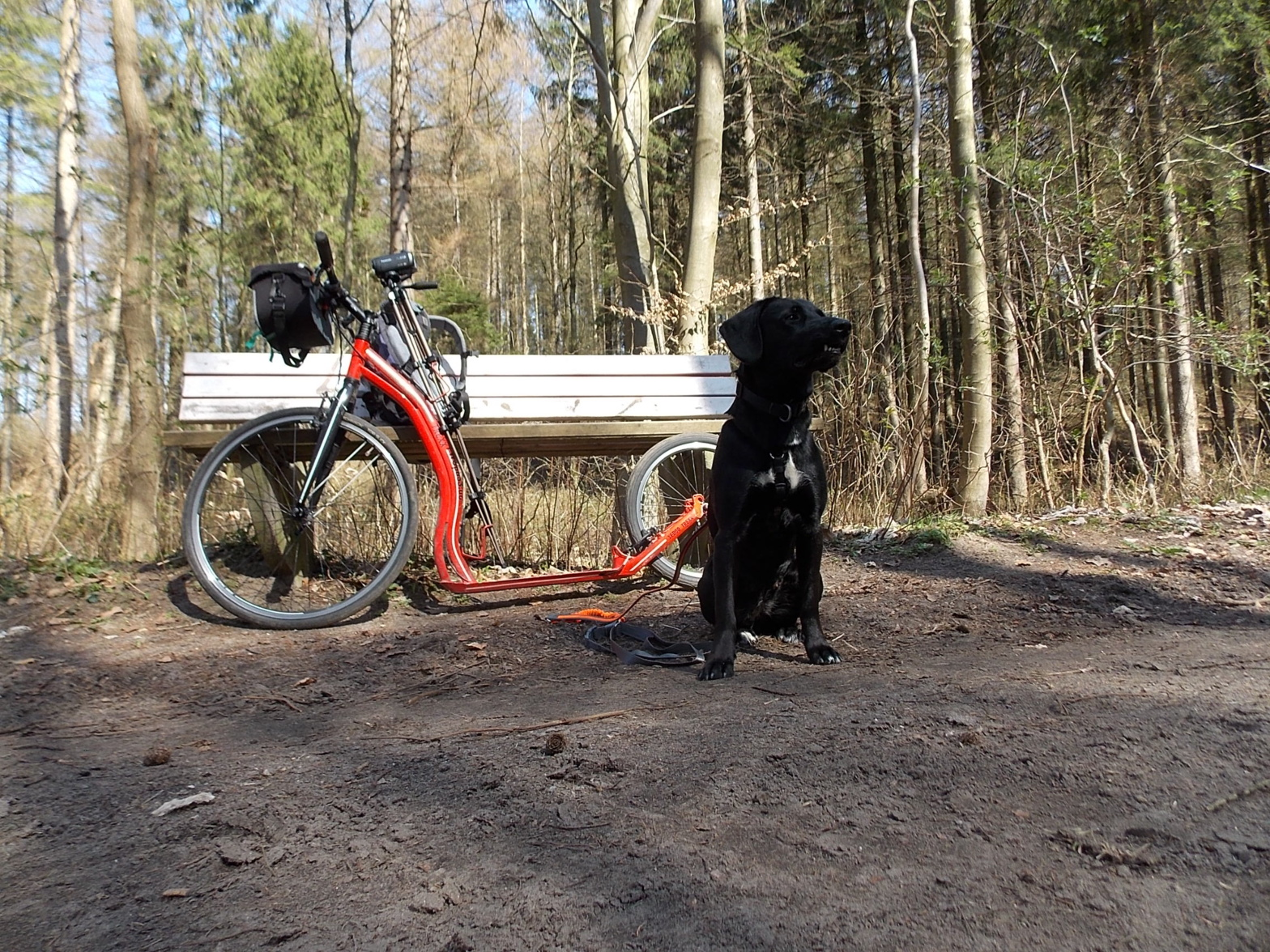 Labrador Lotta und Tretroller