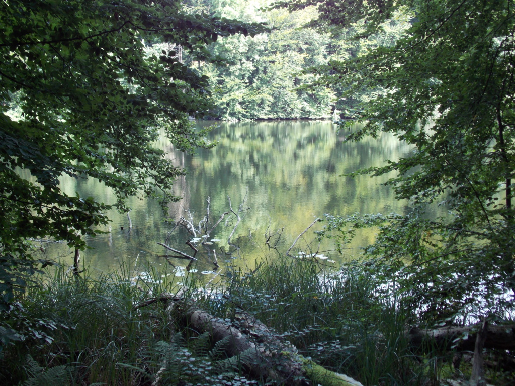 Preetz Plön Wielener See